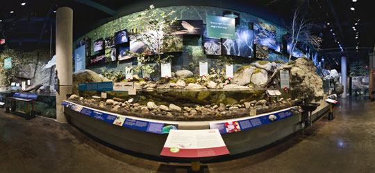 The Wild Center Stream and Trout Pool Exhibits